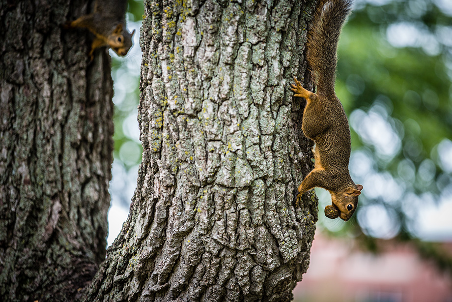One of the many friendly squirrels waiting for you to join the Northwest family.