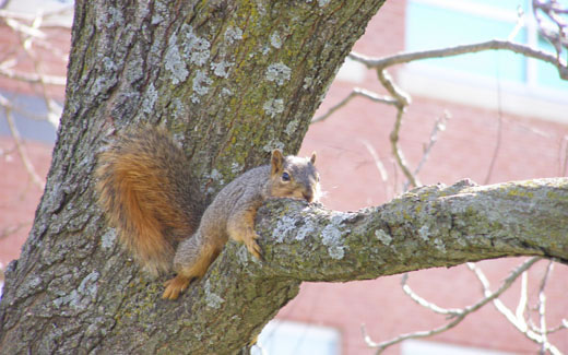 Northwest trees provide shade and shelter for many wild creatures including squirrels and a wide variety of birds.